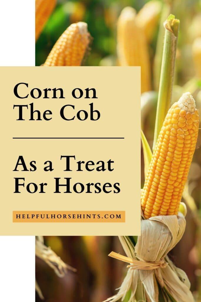 Pinterest pin - Corn On the Cob as Treats for Horses