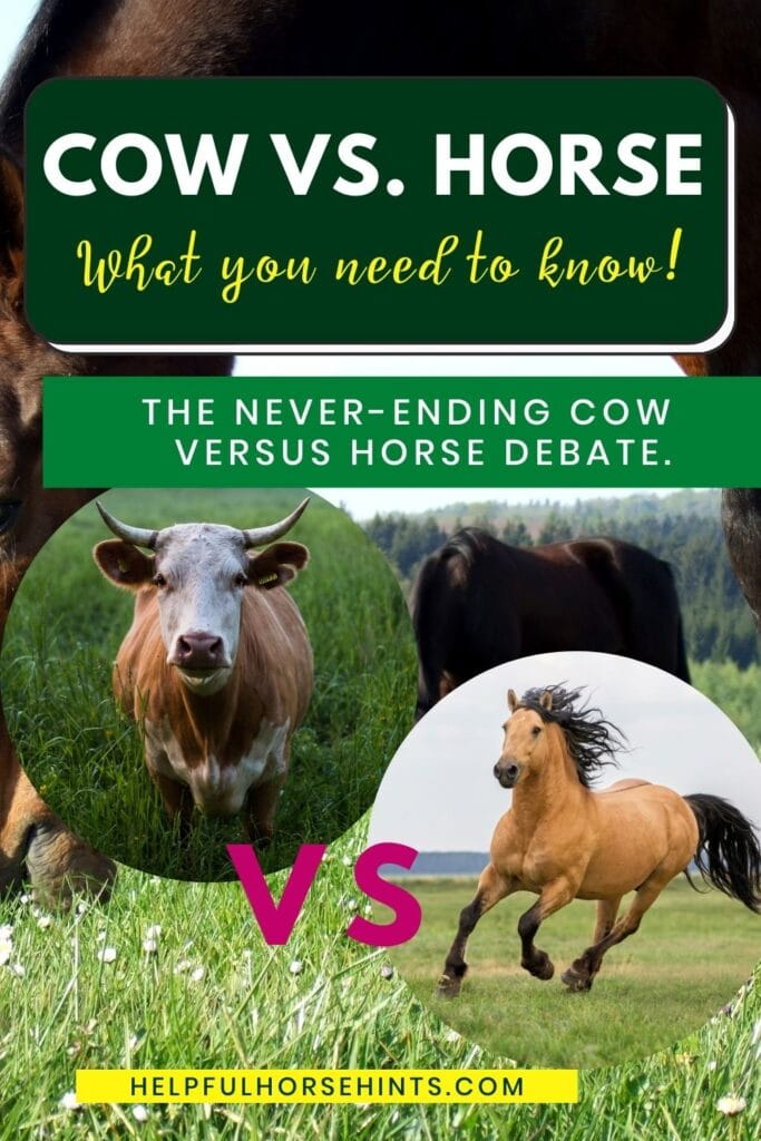 pinterest pin - Cow vs. Horse_ What you need to know