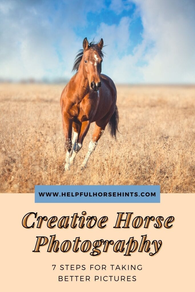 Pinterest pin - Creative Horse Photography - 7 Steps for Taking Better Pictures