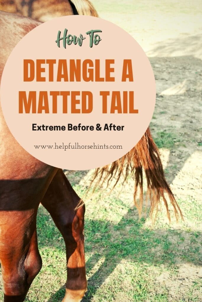 Pinterest pin - Detangling A Matted Tail - Extreme Before & After