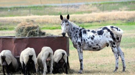 13 Reasons Why Your Ranch Needs a Guard Donkey