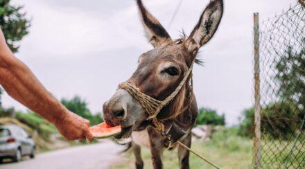 17 Healthy Fruit & Vegetable Treats for Donkeys
