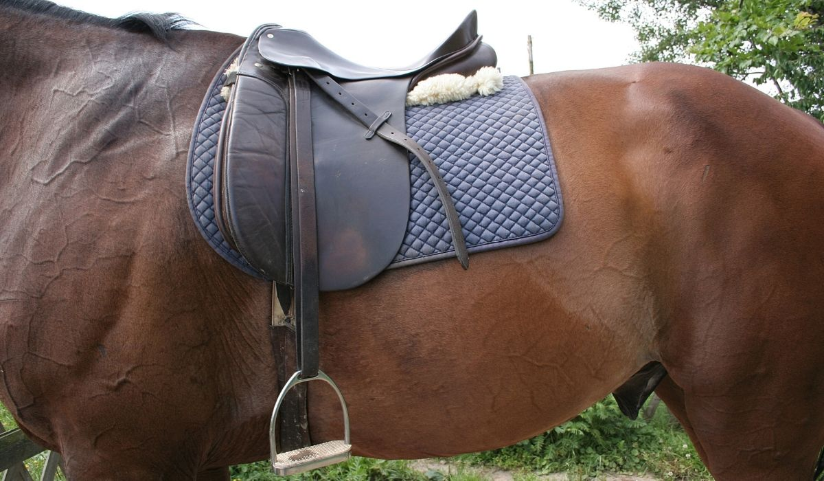 Dressage-Saddle-Pads
