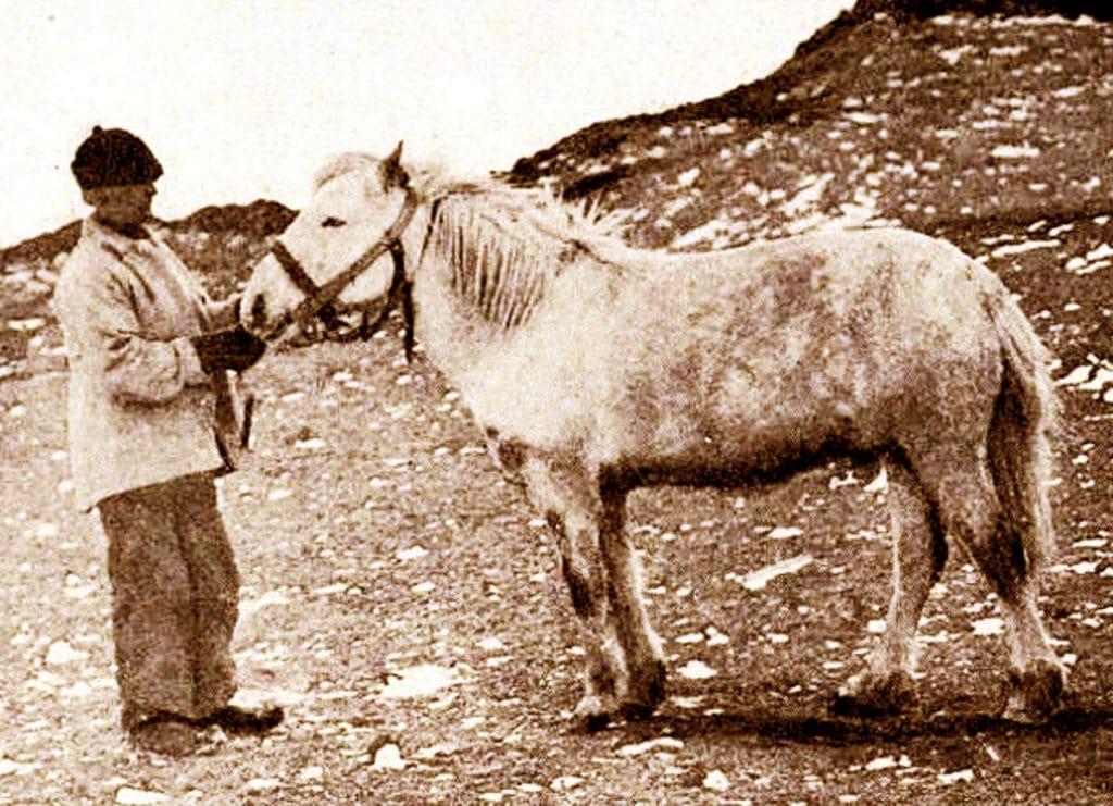 Earnest Shackleton's Siberian Horse Socks