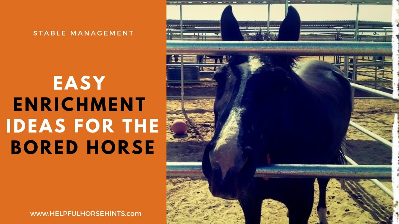 Easy Horse Enrichment Ideas For The Bored Horse Helpful Horse Hints