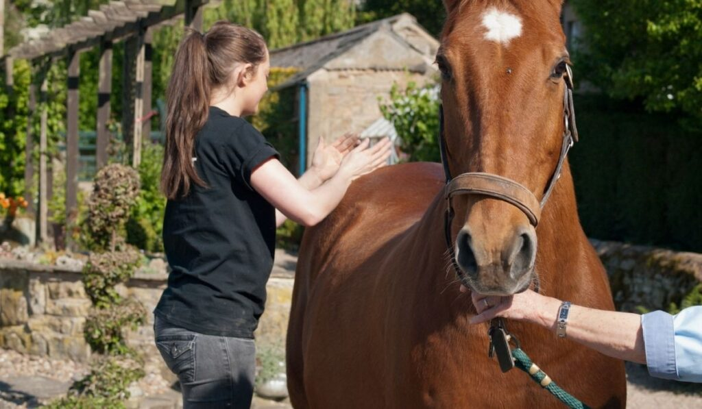 Equine Assisted Physical Therapist
