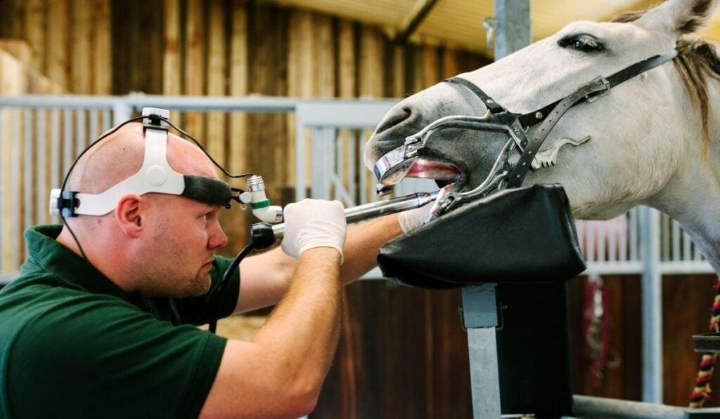 Equine Dental Technician