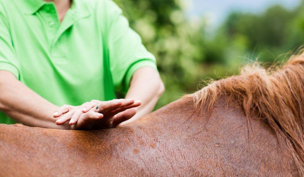 Equine Massage Therapist