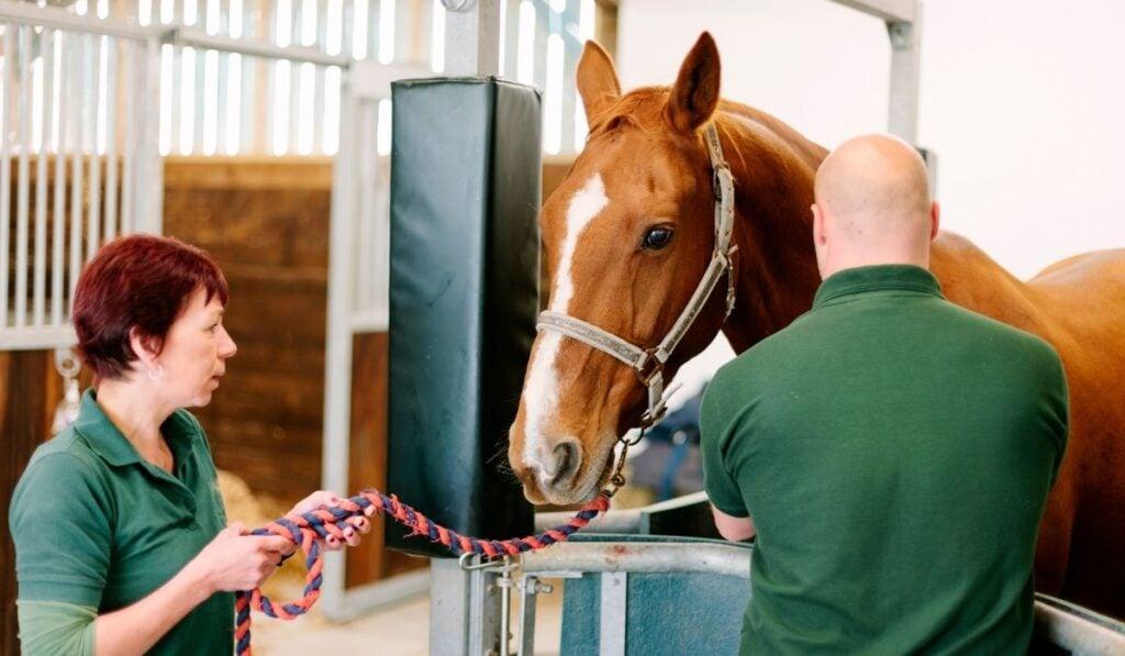 Equine Veterinary Technician