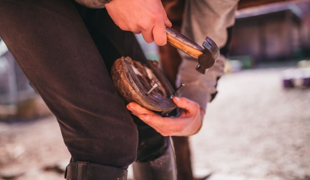 Farrier hammering horseshoe on horse with nails sticking out