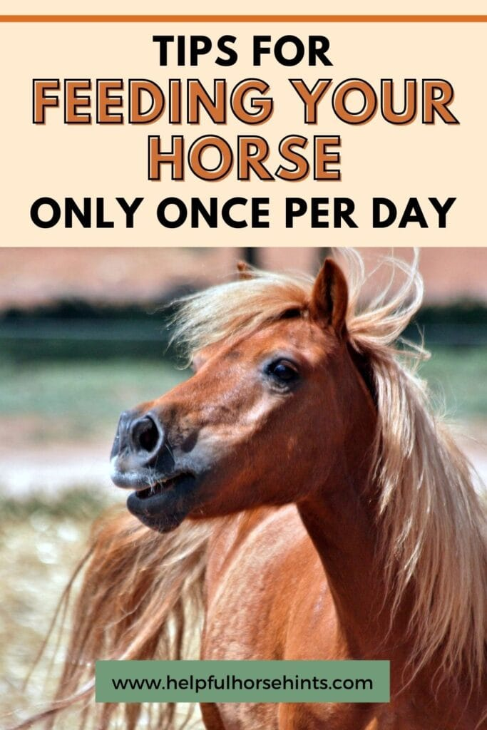 Pinterest pin - Tips for Feeding Your Horse Only Once Per Day