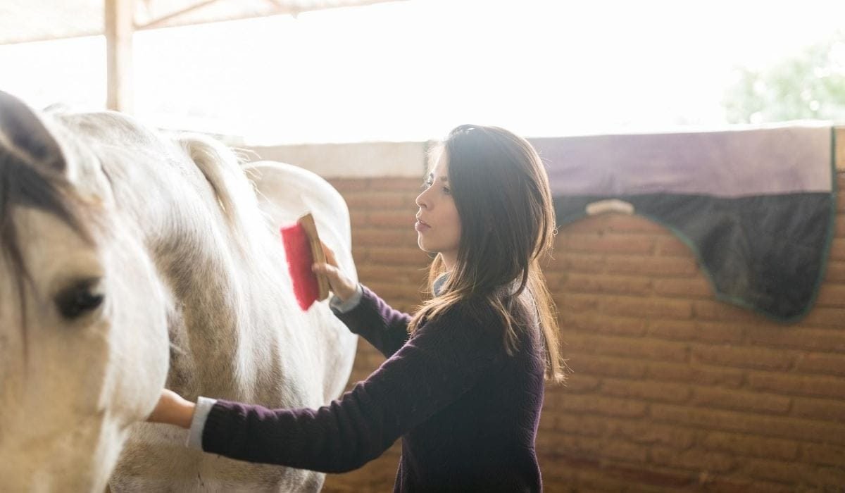 Grooming the horse
