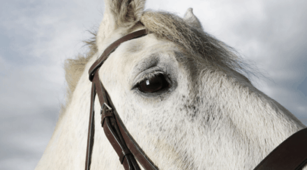 List of 40 Horse Breeds w/ Pictures, Description & Registry Links