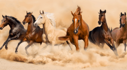 7 Different Types Of Horses – Descriptions and Popular Breeds