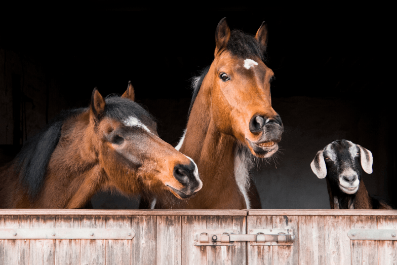 Goats and Horses Together – Do They Get Along?