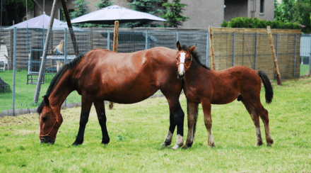Are Horses Mammals? Yes! – Learn why.