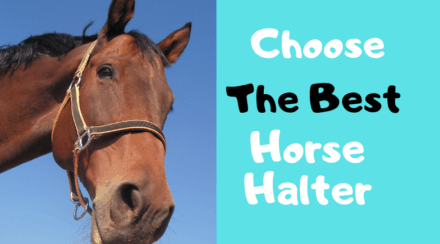 How To Choose The Best Horse Halter For Your Horse