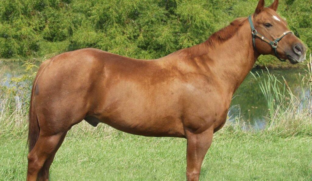Hancock horse