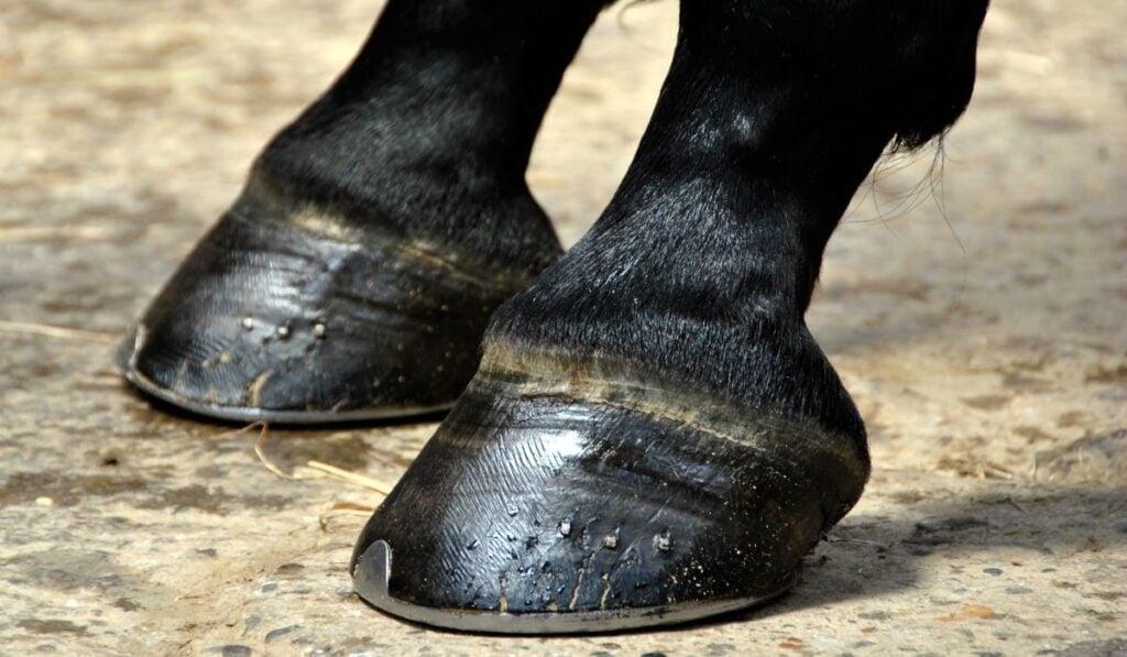 Hoof Boots Horseshoe