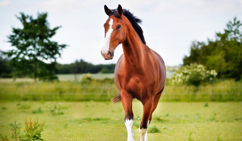 Brown horse running on the field
