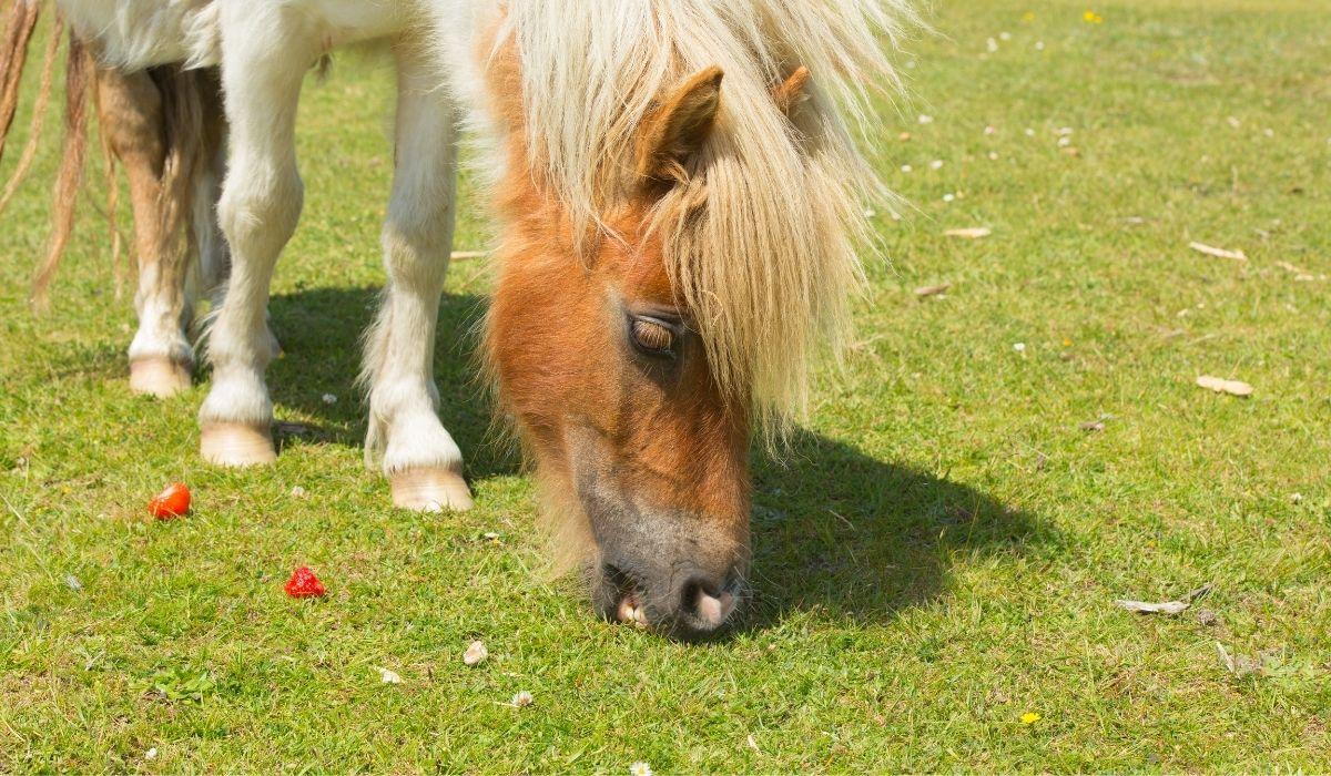 Horse Eating Strawberries