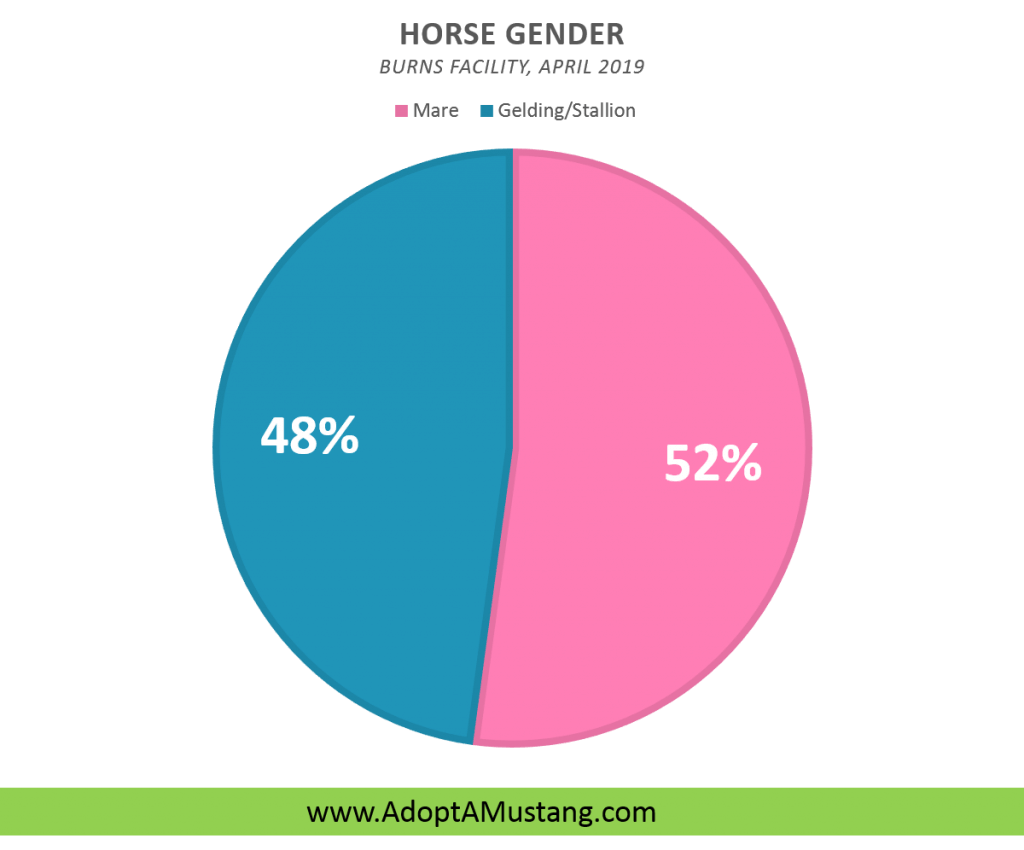 Mustang Horse Gender Breakdown