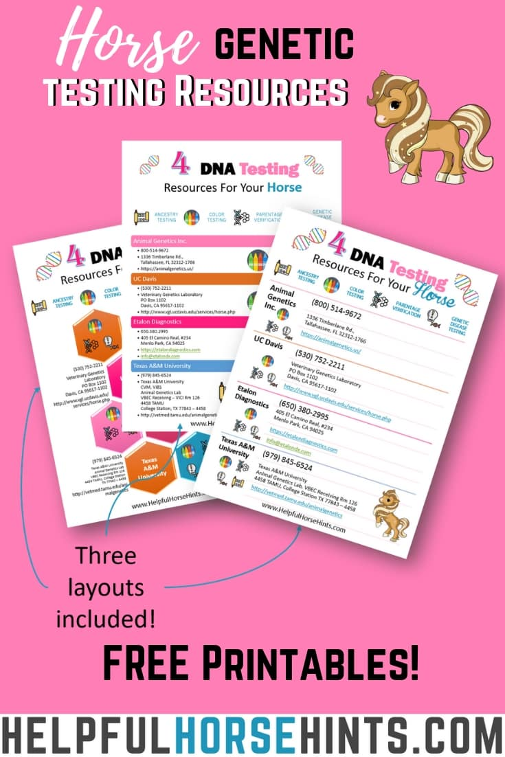 4 Horse DNA Testing Resources