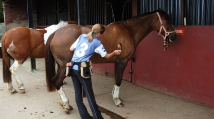26 Equine Careers with Estimated Salaries