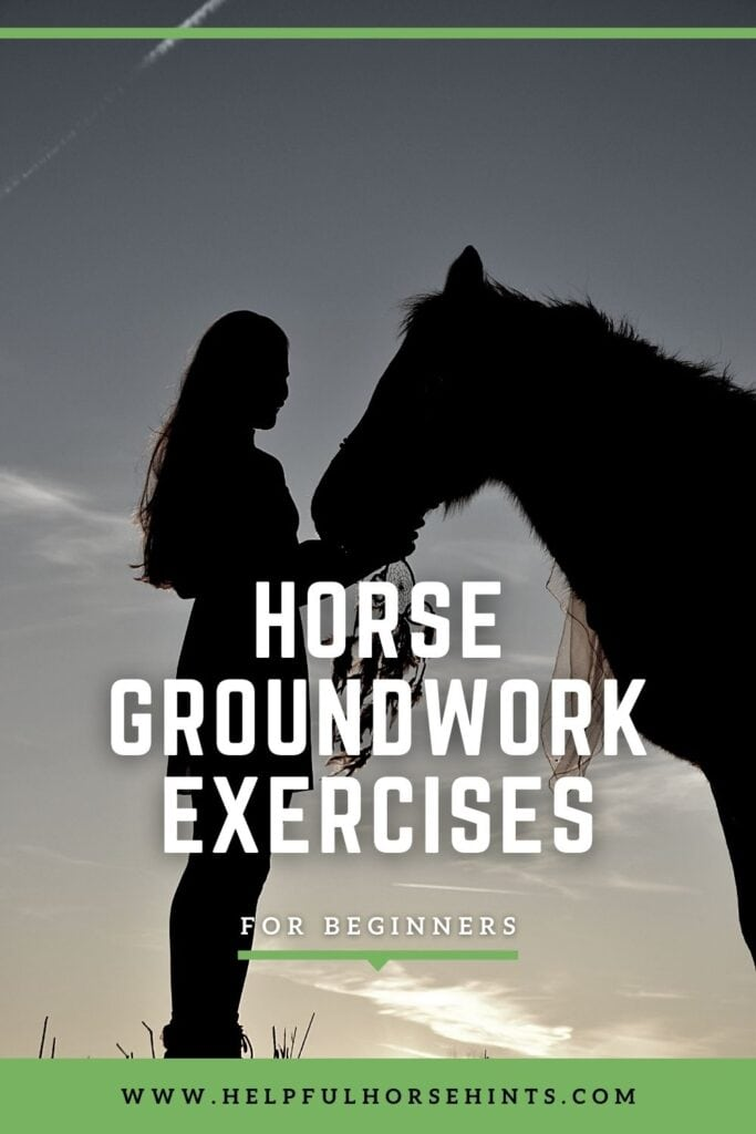 Pinterest pin - Horse Groundwork Exercises for Beginners