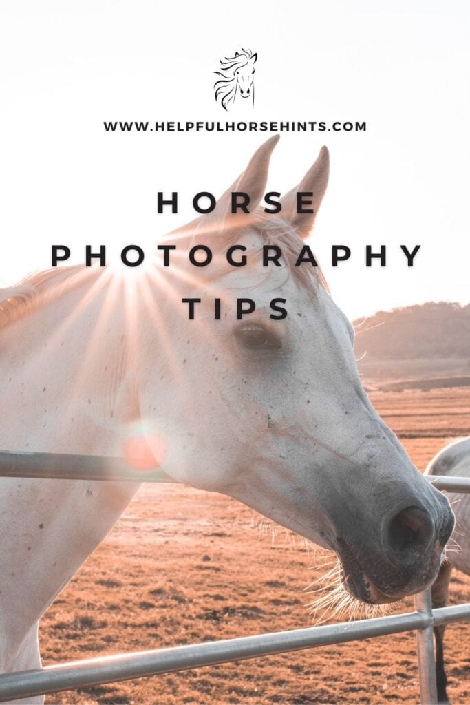 Pinterest pin - Horse Photography tips