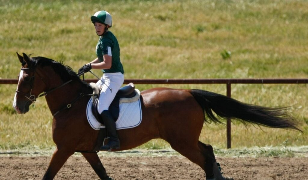 Horse Rider in Competition