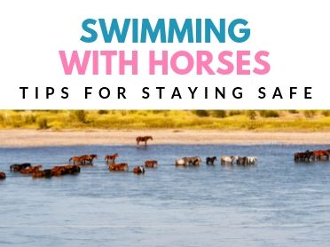 tips for swimming with horses