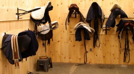 What Tack Do You Need for a Horse: Complete Guide