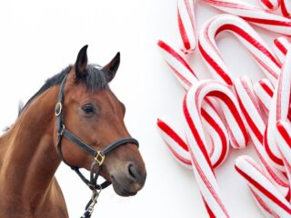 Horse-and-Candy-Canes