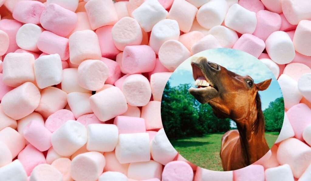 Horse and Marshmallows