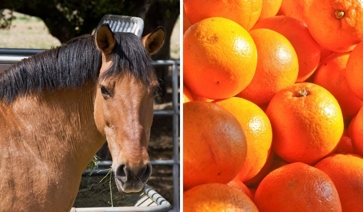 Horse and Oranges