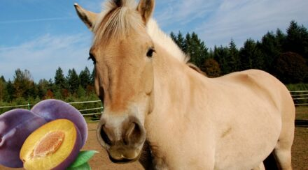 Can Horses Eat Plums?