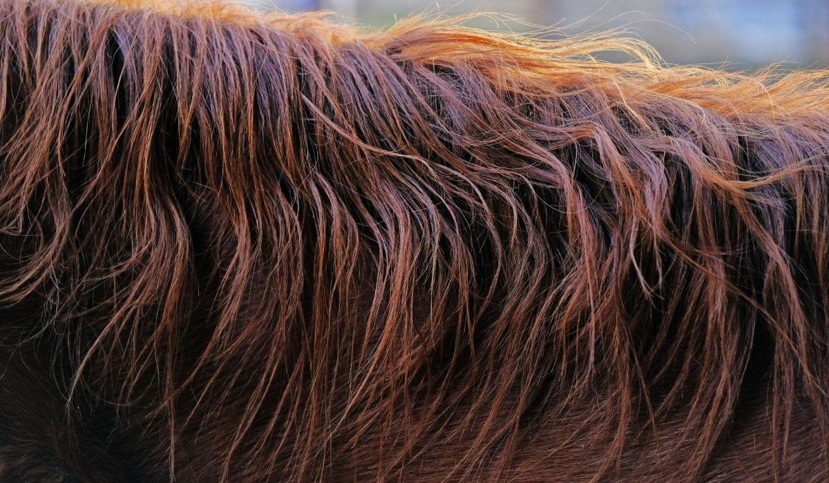 Horse hair closeup