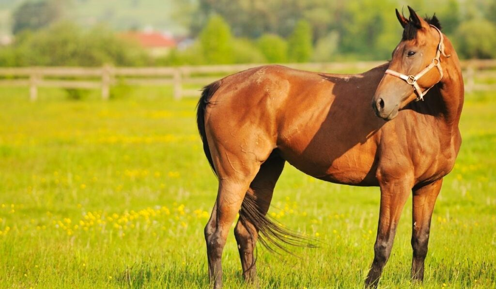 Horse in the grass field