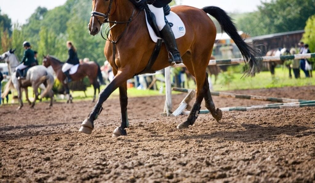 Horse running in mud