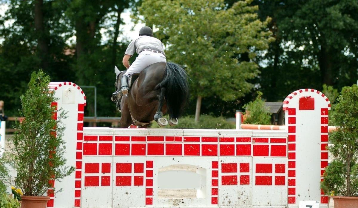 Horse wall jump