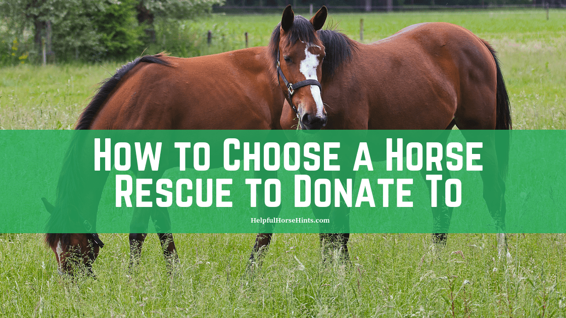 How to Choose A Horse Rescue to Donate To