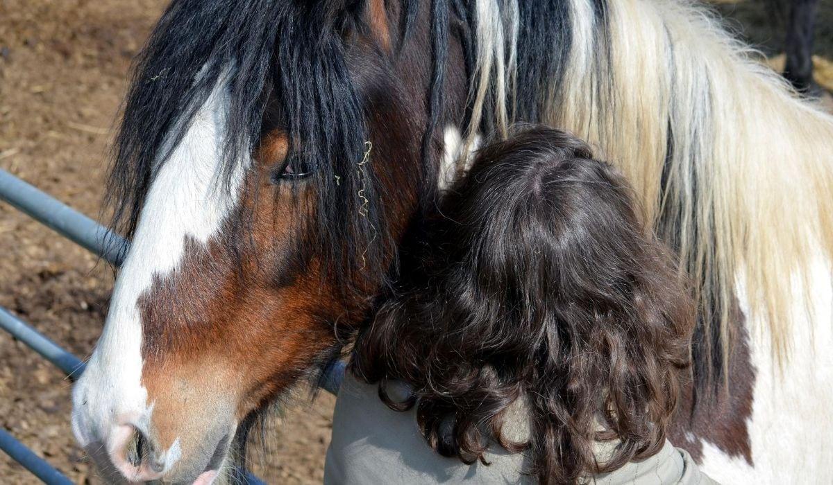 Human hair and horse hair