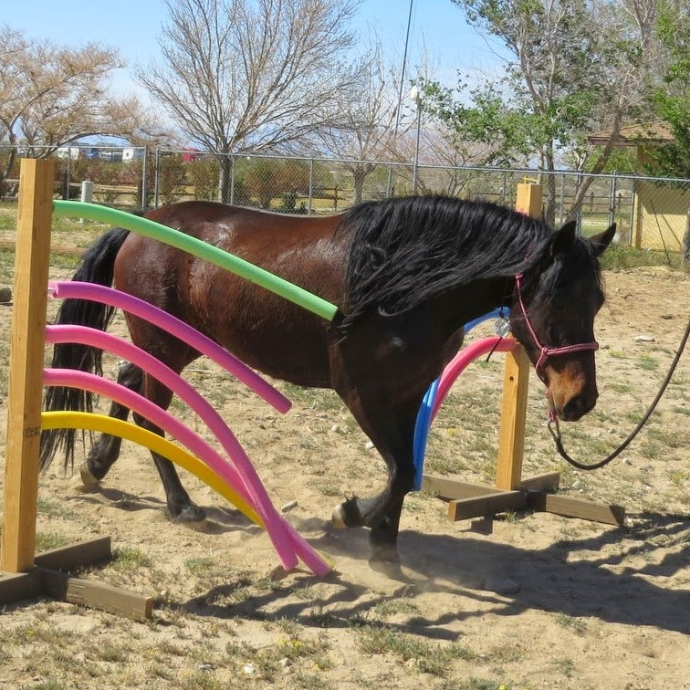horse on pool noodle obstacles