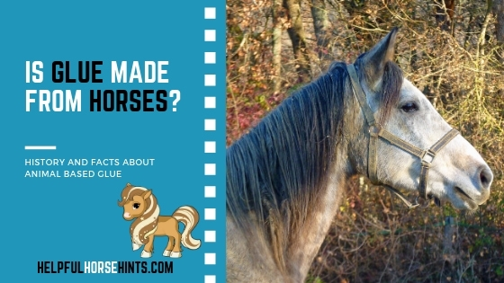 is glue made from horses