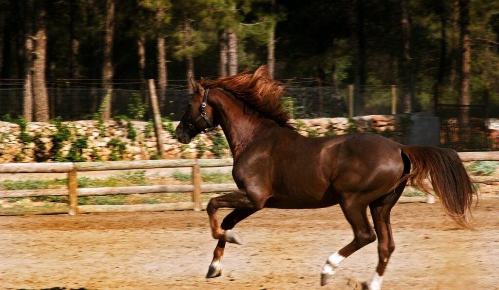 Intelligent Horse Galloping