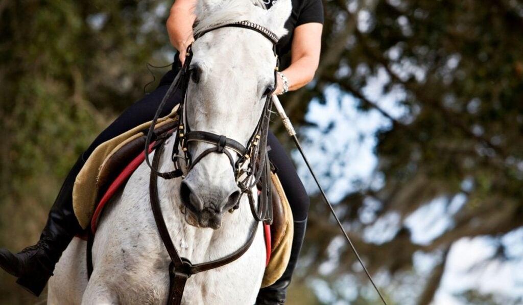Man Riding a Lipizzaner Horse