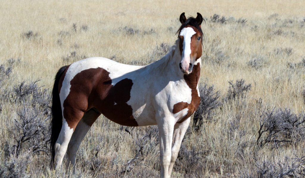Mustang Horse standing in the hill