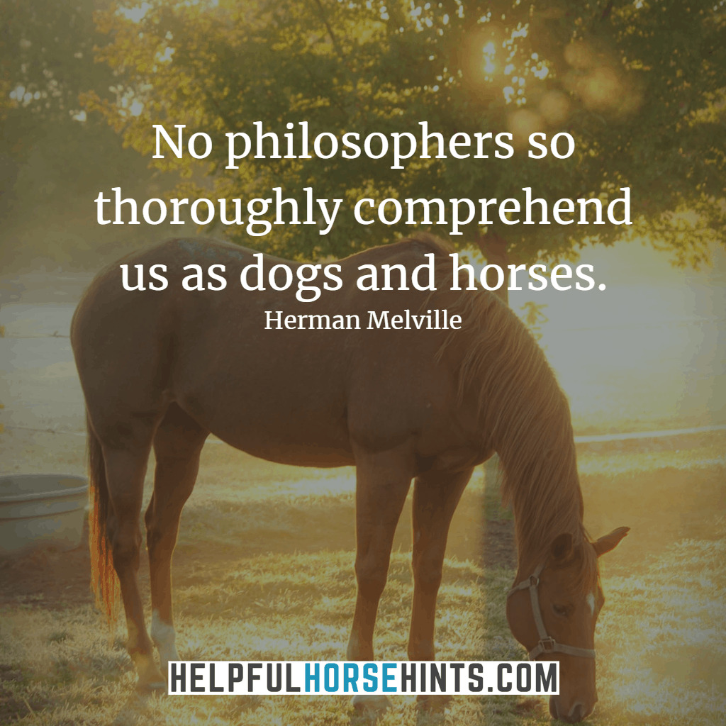 45 Horseback Riding Quotes That Will Inspire You W Shareable Pictures Helpful Horse Hints
