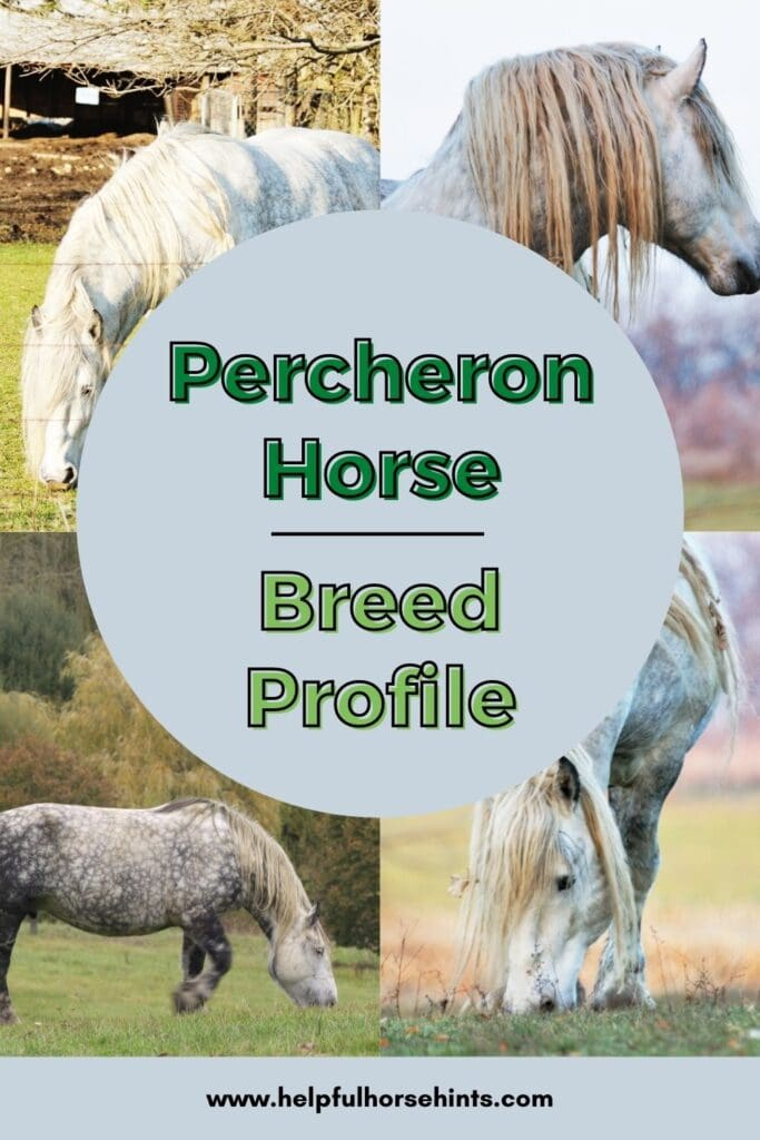 Pinterest pin - Percheron Horse Breed Profile